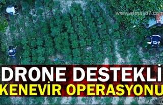 Drone destekli kenevir operasyonu