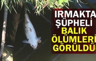 Irmakta şüpheli balık ölümleri görüldü
