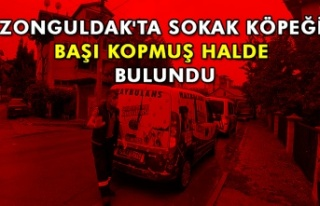 Zonguldak'ta sokak köpeği başı kopmuş halde...