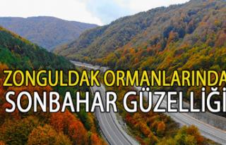 Zonguldak ormanlarında sonbahar güzelliği