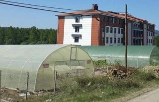 Öğrenciler okul bahçesine sera kurdular, üretime...
