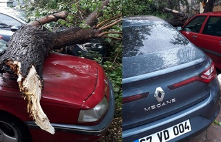 Şiddeti ağacı devirdi