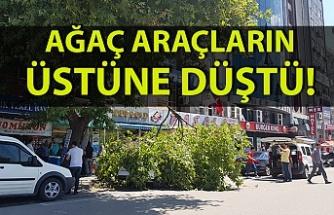 Uzun Mehmet Caddesi'nde ağaç araçların üstüne düştü
