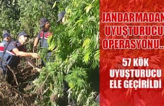 Jandarmadan uyuşturucu operasyonu... 57 kök uyuşturucu ele geçirildi