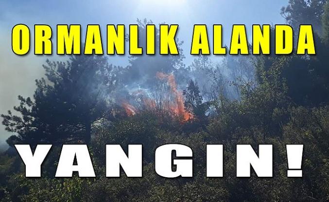Ormanlık alanda yangın!