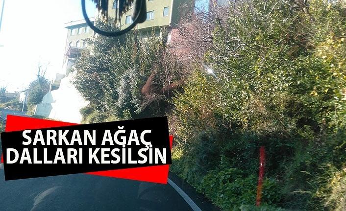 Sarkan ağaç dalları kesilsin